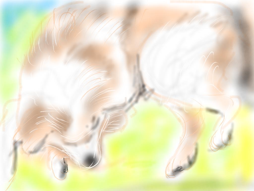 わが家の老犬シーサー