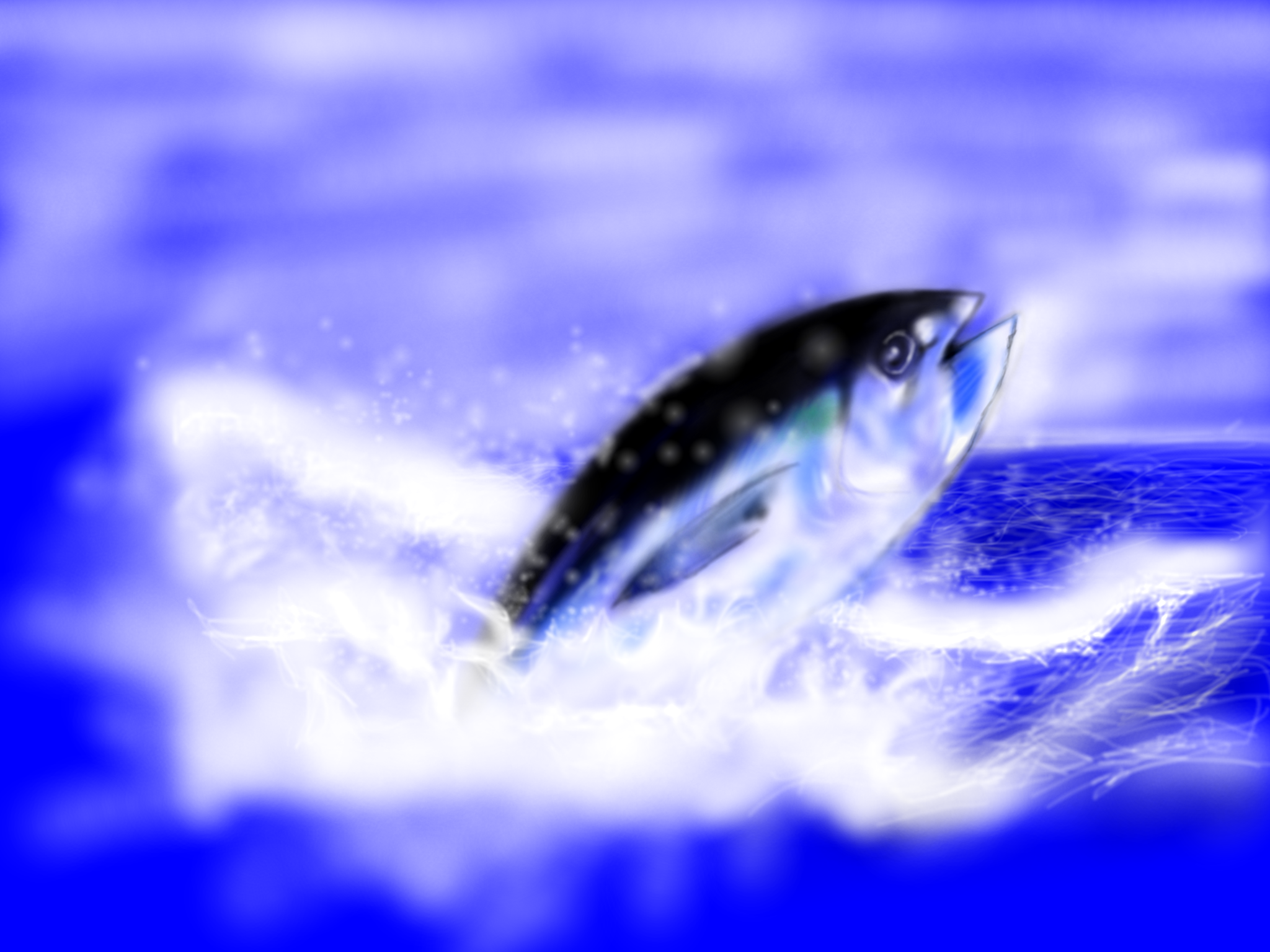 マグロの画像 p1_8