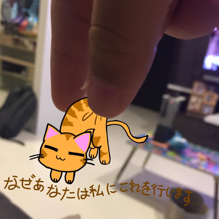 Cat (I'm not good at japanese -v-