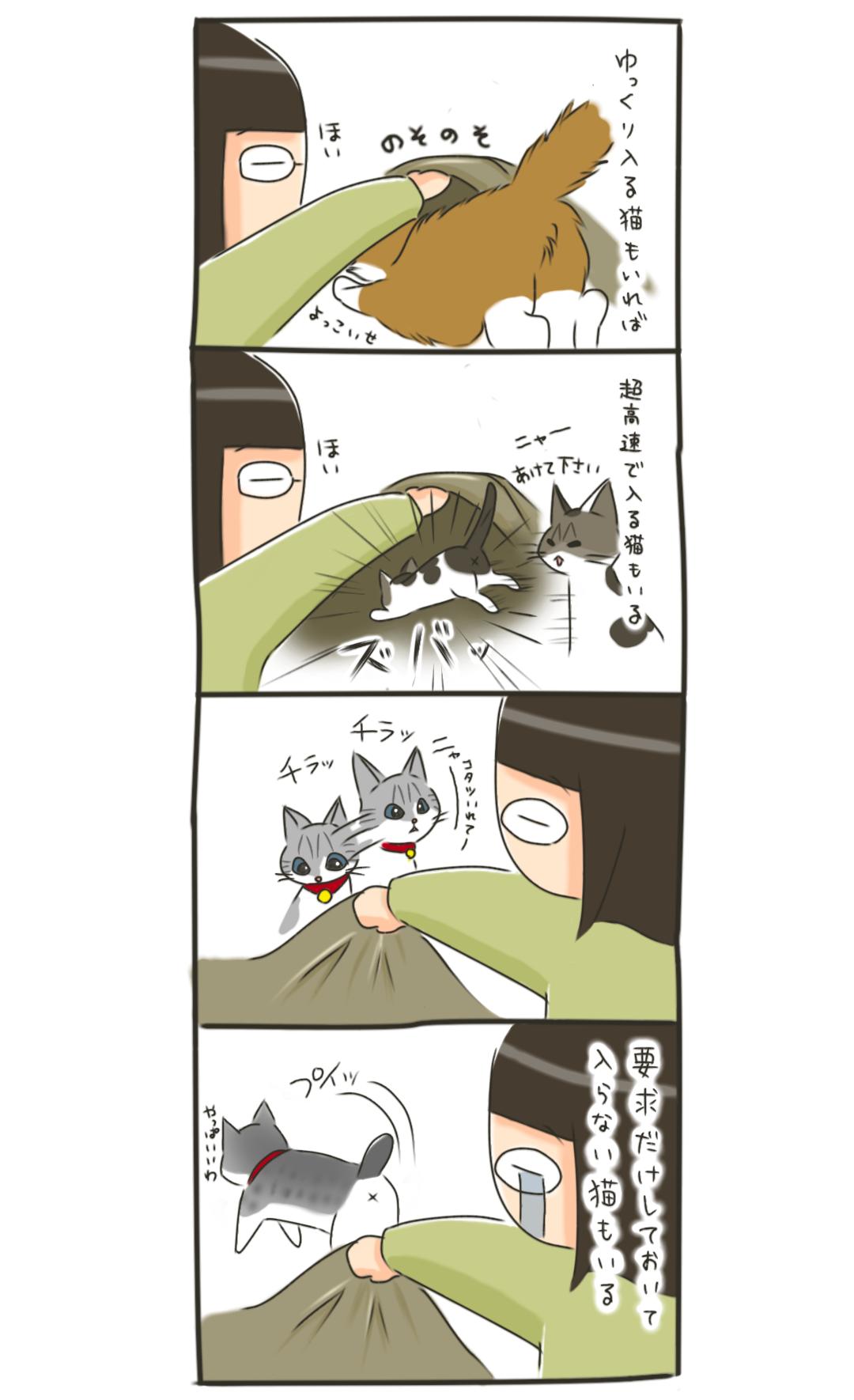 猫の布団事情は様々